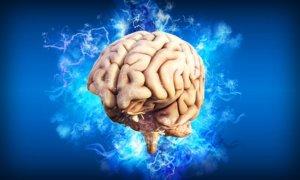 cerveau, émotions